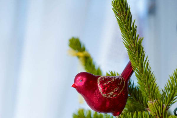 Julemarked og Rørosvidda